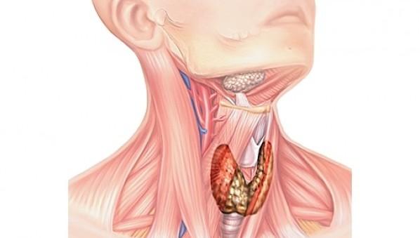 Удушье в горле из-за щитовидной железы