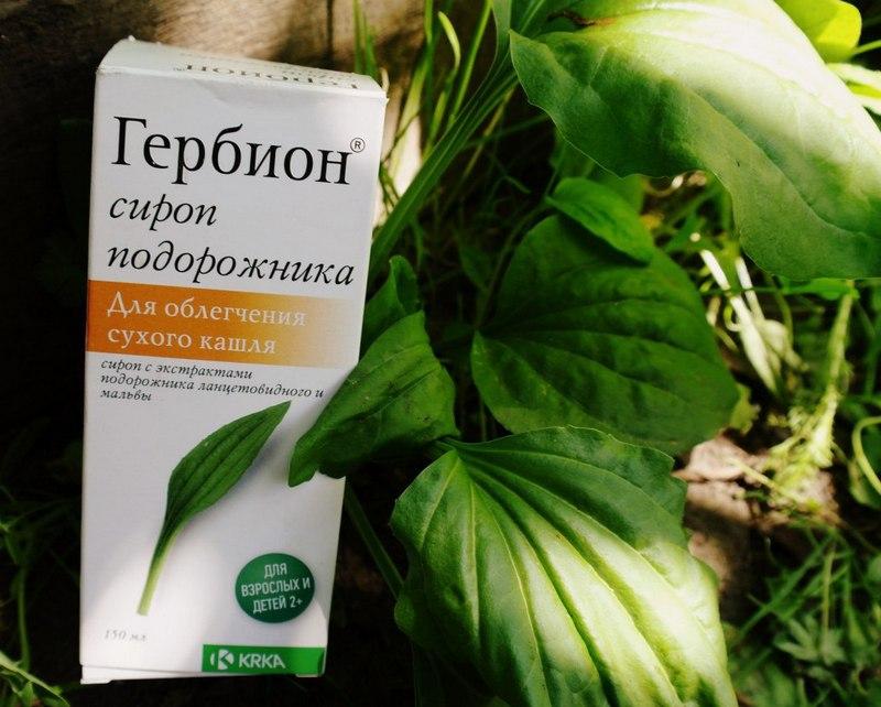 гербион с подорожником