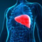 Люди, имеющие ожирение печени, чаще умирают от COVID-19.